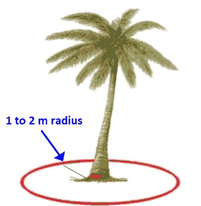 How to apply fertilizer for coconut tree