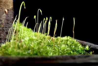 Fertilizer for moss