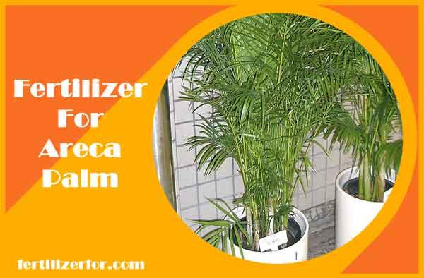 fertilizer for areca palm