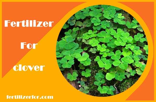 Fertilizer for clover plant