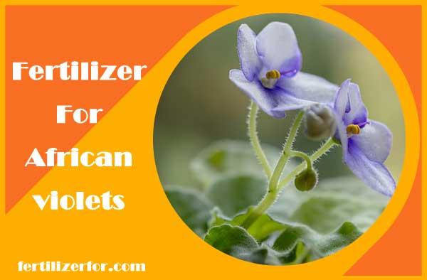 Fertilizer for African violets