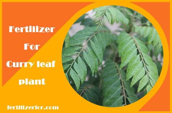 Fertilizer for curry leaf plant