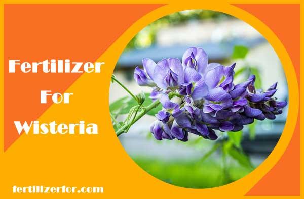 Fertilizer for wisteria